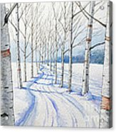 Birch Trees Along The Curvy Road Acrylic Print