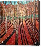 Birch Trees At Dusk Acrylic Print