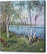 Birch Trees By The River Acrylic Print