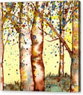 Birch Trees Acrylic Print by Diane Ferron
