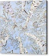 Birch Trees Acrylic Print by Leo Gehrtz