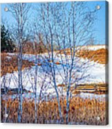 Birches And Cattails Acrylic Print