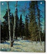 Birches  Acrylic Print by Dianne  Lacourciere