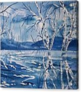 Birches In Blue Acrylic Print