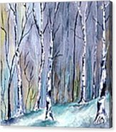 Birches In The Forest Acrylic Print