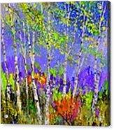 Birchtrees 56412 Acrylic Print