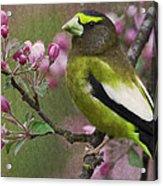 Bird 5 Acrylic Print