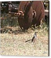 Bird Alert Acrylic Print