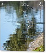 Bird And Pond Acrylic Print