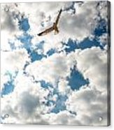 Bird And The Clouds Acrylic Print