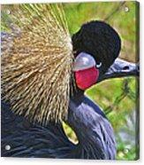 Bird Exotica  Acrylic Print