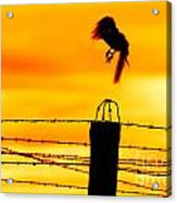 Bird Flying Off From Prison Fence Acrylic Print