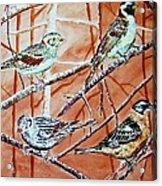 Bird Foursome Acrylic Print by Linda Vaughon