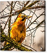 Bird Holding Food In Mouth Acrylic Print