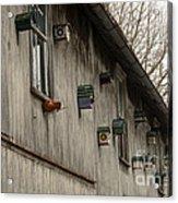 Bird Houses Acrylic Print