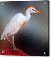 Bird In Faux Oil Acrylic Print