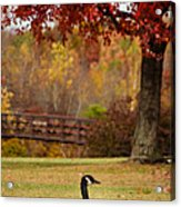 Bird In Park Acrylic Print