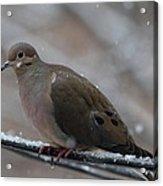 Bird In Snow - Animal - 011310 Acrylic Print