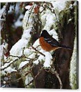 Bird In Snow Acrylic Print
