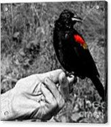 Bird In The Hand.seattle.bw Acrylic Print
