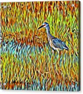 Bird In The Reeds Acrylic Print