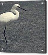 Bird In The Water Acrylic Print