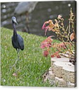 Bird In Yard Acrylic Print