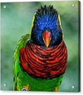Bird In Your Face  Acrylic Print