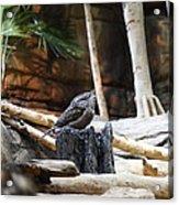 Bird - National Aquarium In Baltimore Md - 12129 Acrylic Print