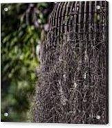 Bird Nest Tree Acrylic Print