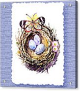 Bird Nest With Daisies Eggs And Butterfly Acrylic Print
