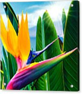 Bird Of Paradise 5 Acrylic Print