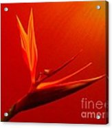 Bird Of Paradise - Flora - Flower Acrylic Print