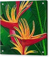 Bird Of Paradise Painting Acrylic Print