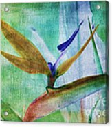 Bird Of Paradise Watercolor Acrylic Print