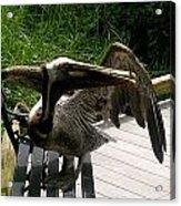 Bird On A Bench Acrylic Print
