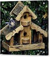 Bird On A House Acrylic Print