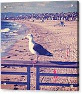 Bird On A Rail Acrylic Print