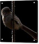 Bird On A Rope 2 Acrylic Print