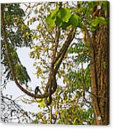 Bird On A Vine In Jungle Forest In Chitwan Np-nepal  Acrylic Print
