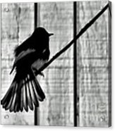 Bird On A Wire I Acrylic Print