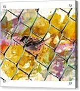 Bird On Chain Acrylic Print