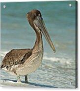 Bird On The Beach Acrylic Print