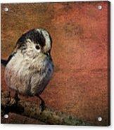 Bird On The Beam Acrylic Print