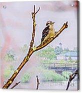 Bird On The Brunch Acrylic Print