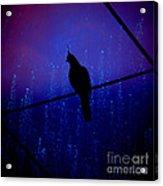 Bird On The Wire ... Acrylic Print