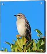 Bird On Tree Top Acrylic Print