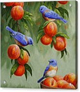 Bird Painting - Bluebirds And Peaches Acrylic Print
