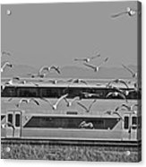 Bird Train Alviso 2 Acrylic Print