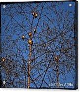 Bird Tree Acrylic Print